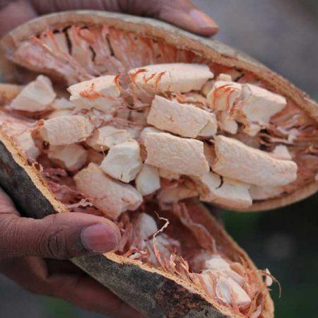 baobabfruit2